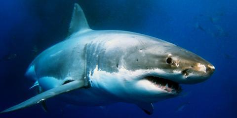 3 Tips for Capturing Amazing Shark Photos, Waialua, Hawaii