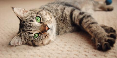 Why Carpet Cleaning Is Essential for Animal Owners, Cameron, Wisconsin