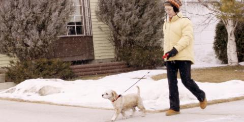 4 Essential Pet Care Tips for Winter, Fairfield, Ohio