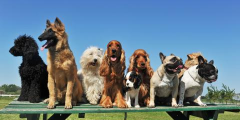What Kind of Coat Does Your Dog Have?, Fairbanks North Star, Alaska