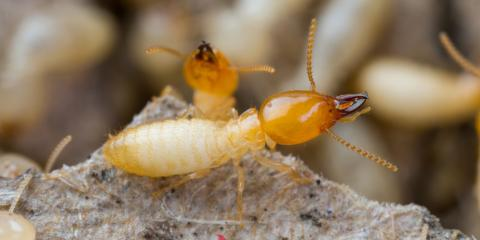 3 Signs It's Time to Schedule a Termite Inspection, Dayton, Ohio