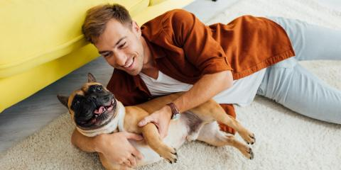 4 Key Carpet Cleaning Tips for Dog Owners, Dawsonville, Georgia