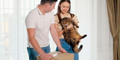 3 Tips for Moving with a Cat, Rochester, New York