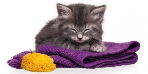 What You Should Know About Cat Grooming, Newport-Fort Thomas, Kentucky