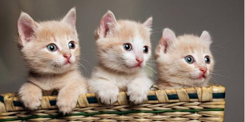 What to Know About Kitten Care, Newport-Fort Thomas, Kentucky