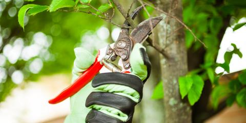 3 Qualities to Consider When Hiring a Certified Arborist, Ozark, Alabama