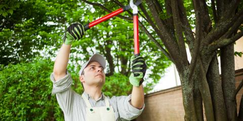Why Should I Hire an Arborist for Tree Care?, Ewa, Hawaii