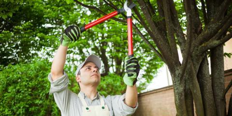 3 Benefits of Pruning Your Trees, Ewa, Hawaii