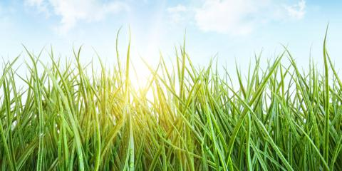 Jake's Lawn Care, Lawn Care Services, Services, Fort Worth, Texas