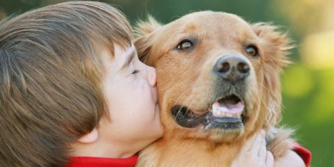 How to Cope When Your Dog Has Cancer, ,