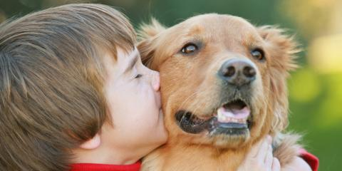 Preventing Dog Bites: 4 Tips to Teach Your Children, Tacoma, Washington