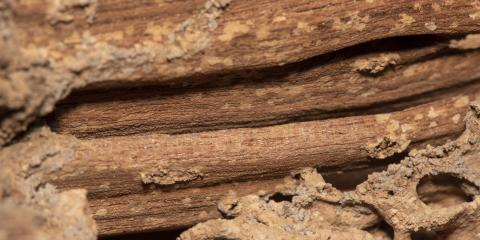 5 Signs You're Dealing with a Termite Infestation, Houston, Texas