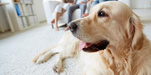 A Guide to Flooring for Dog Owners, Wentzville, Missouri