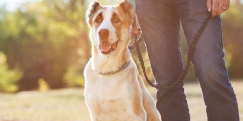 Can You Bring a Dog to a Funeral Service?, Kannapolis, North Carolina