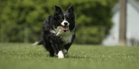 Pet Hale Offers PureVita™ Dog Treats, Ewa, Hawaii