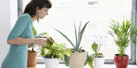 3 Surprising Benefits of Indoor Plants, Fairfield, Connecticut