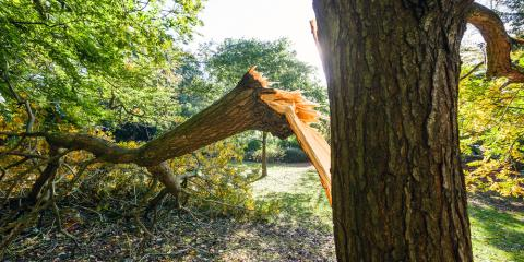 Tips for Checking & Caring for Storm Damaged Trees, ,