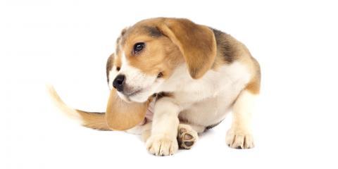 3 Common Fall Pet Allergies , Green, Ohio