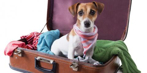 A Honolulu Moving Company Offers 3 Tips For Moving Your Pet To Hawaii, Ewa, Hawaii