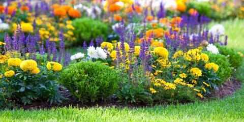 3 Tips to Revive an Overgrown Garden, Holland, Wisconsin