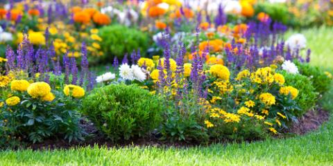4 Native Virginian Flowers To Add To Your Landscaping This Spring, South  River, Virginia