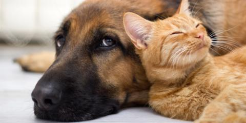 3 Veterinarian-Approved Pet Safety Tips for Your Home, Lincoln, Nebraska