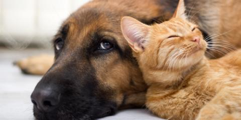 Why You Should Let a Veterinarian Microchip Your Pet, Elk Grove, California