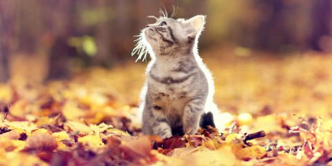 3 Autumn Safety Tips for Pet Owners From Veterinarians, Kinsman, Ohio