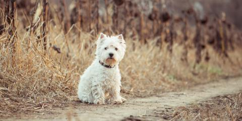 4 Questions to Ask Your Veterinarian About Dog Breeds, Wentzville, Missouri