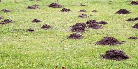 How to Determine if You Have a Mole Infestation, Elizabethtown, Kentucky