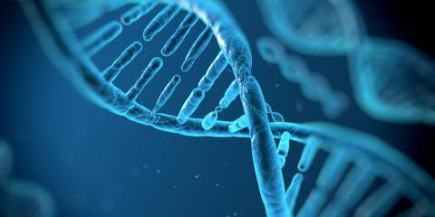 DNA Testing for Half Siblings: How Accurate Is It?, St. Louis, MO, Illinois