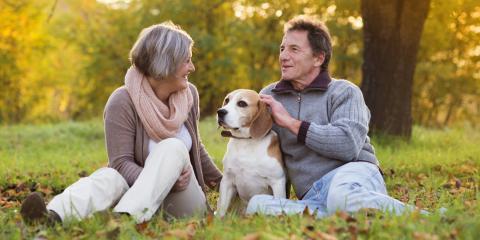 4 Tips for Keeping a Senior Dog Active, Fairfield, Ohio