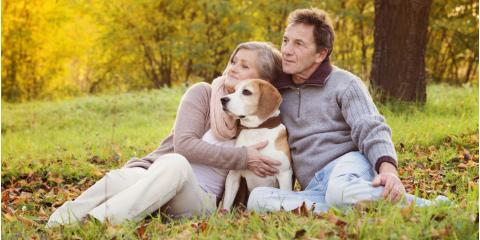 Why Senior Dogs Need Wellness Testing, Southgate, Kentucky
