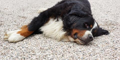 How Pet Owners Benefit From Gravel, Cincinnati, Ohio