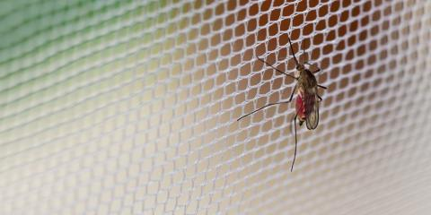 Mosquito Pest Control: What Are the Options?, Bullard, Texas