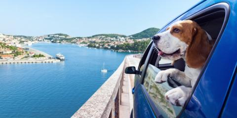 4 Tips for Safe Driving With a Dog or Cat, Dothan, Alabama
