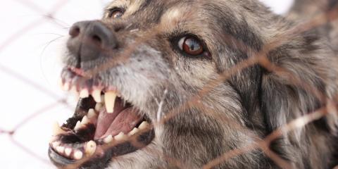 4 Steps Every Dog Bite Victim Should Take, Mason, Ohio