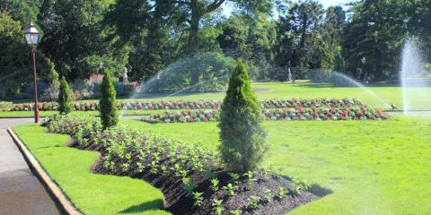 3 Ways to Save an Overwatered Tree, Newburgh, New York