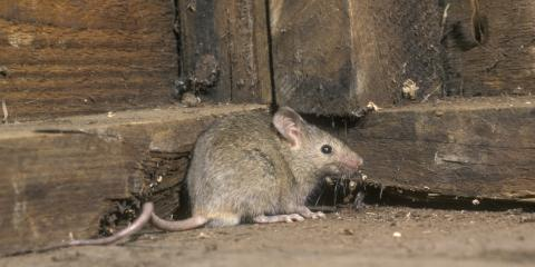 3 Rodent Control Tips to Safeguard Your Property, Port Orchard, Washington