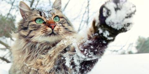 3 Winter Safety Tips for Your Pet, Green, Ohio