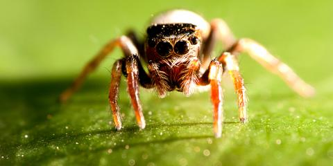 4 FAQs About Spiders , Bolivar, Missouri