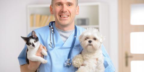 March Is Pet Poison Prevention Month, Rhinelander, Wisconsin