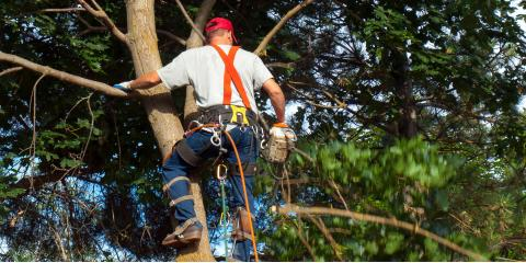 Tree Removal Basics: Can a Neighbor Force Me to Cut Down My Tree?, Center City, Minnesota