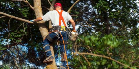3 Reasons to Leave Tree Cutting to the Professionals, Grand Rapids, Wisconsin