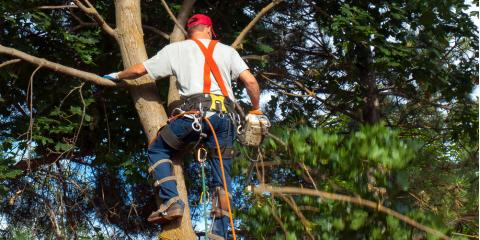 Why You Need a Certified Arborist to Care for Your Trees, High Point, North Carolina