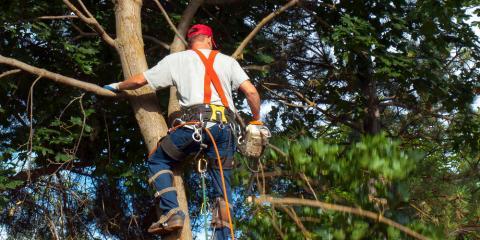 4 Tree Problems You Shouldn't Ignore, Midland City, Alabama