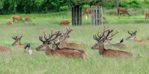 Gardening Supplies Store Offers 5 Tips for Planting a Food Plot for Hunting , Clifton, Texas