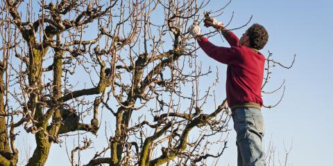 3 Common Tree Problems in Winter, High Point, North Carolina