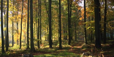 What You Need to Know About Timber Taxation, Camden, Arkansas