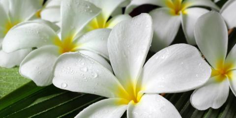 4 Beautiful Flowers for Your Hawaiian Landscape, Eleele-Kalaheo, Hawaii
